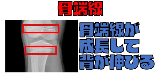骨端線が 成長して 背が伸びる